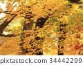 秋天 秋 秋天的印象 34442299