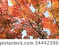 秋天 秋 秋天的印象 34442300