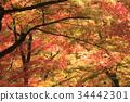 秋天 秋 秋天的印象 34442301