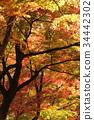 秋天 秋 秋天的印象 34442302