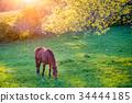 Grazing horse 34444185