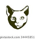 Portrait of a cat. Vector illustration. 34445851