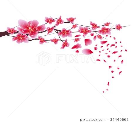 Sakura flowers. Cherry blossom background 34449662