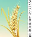 A Barley Illustration 34457772