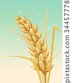 小麥 穀類 糧食 34457778