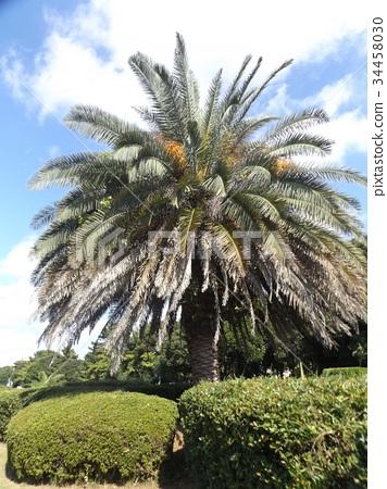외떡잎식물, 단자엽식물, 관엽 식물 34458030