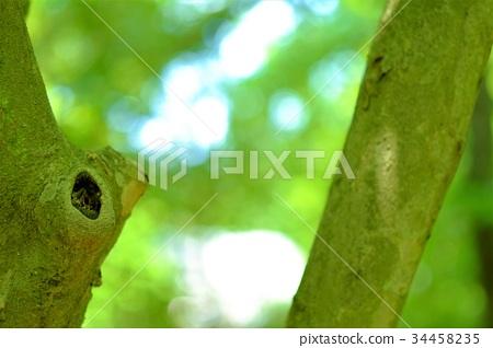 나무 구멍 보 오지 (가로) 34458235