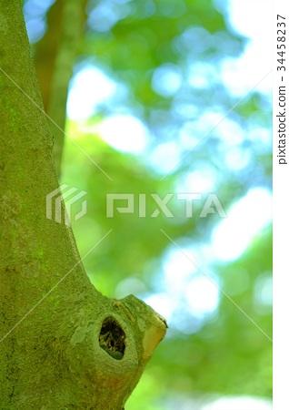 나무 구멍 보 오지 (세로) 34458237