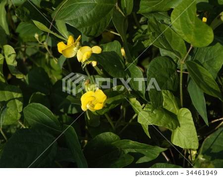 가을, 노랑, 꽃 34461949