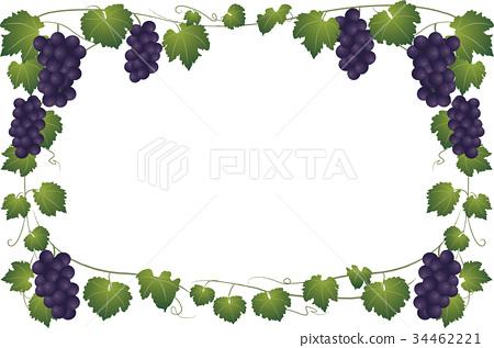 葡萄和藤框架 34462221