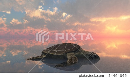 Sea turtle laying eggs on the beach 3d rendering 34464046