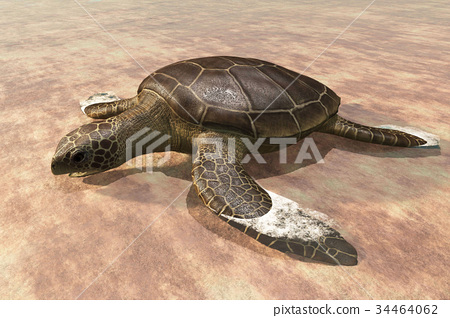Sea turtle laying eggs on the beach 3d rendering 34464062