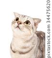 Cute cat kitten looking up 34475620