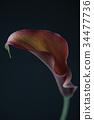 花朵 花 花卉 34477736