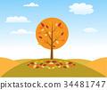 autumn tree vector illustration 34481747