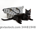 fashionable cat, stylish handbag 34481948