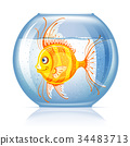 Fish in aquarium 34483713