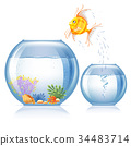 Fish and aquarium 34483714