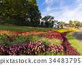แปลงดอกไม้,ฤดูใบไม้ร่วง,ดอกไม้ 34483795
