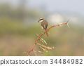 鳥 木頭 木 34484982