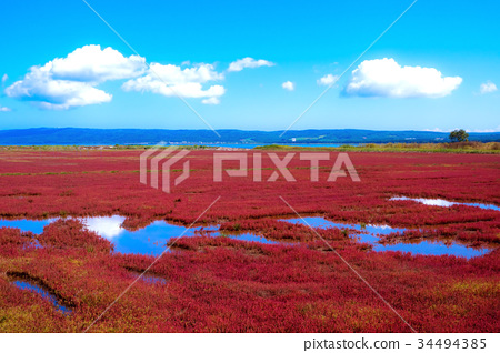 노토로 호 산호 잔디 (아바시리시) 34494385