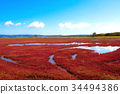노토로 호 산호 잔디 (아바시리시) 34494386