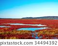 노토로 호 산호 잔디 (아바시리시) 34494392