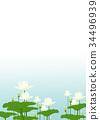 花 蓮花 季節 34496939