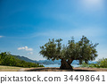 Shōdo, Island, olive 34498641
