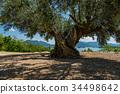 Shōdo, Island, olive 34498642