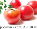 西紅柿 番茄 東垣麻由 34501830