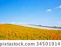 나 정도 정원 꽃밭 34501914