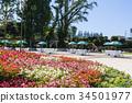 ดอกไม้,แปลงดอกไม้,ทุ่งดอกไม้ 34501977