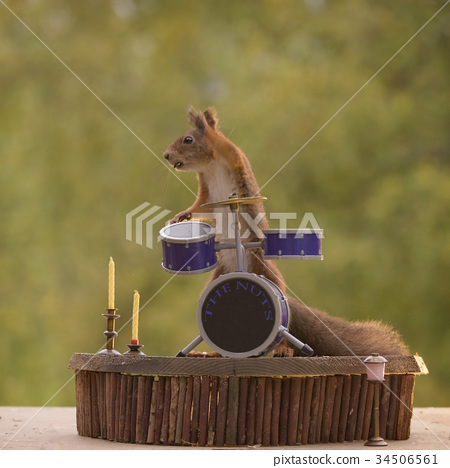 squirrel standing behind a Drum Kit 34506561