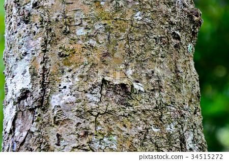 樹幹,紋路 34515272