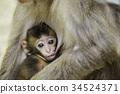 귀여운 아기 원숭이 34524371