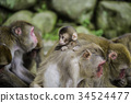 동물, 원숭이, 연하장 34524477