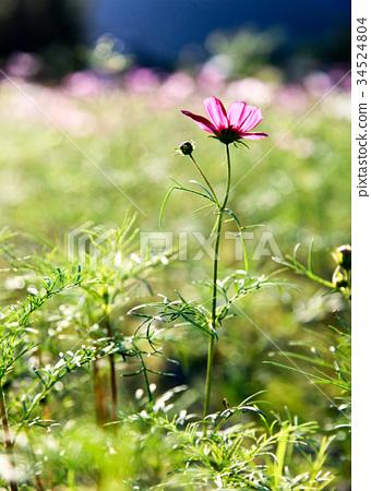 花卉 34524804