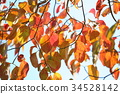 秋天 秋 樹葉 34528142