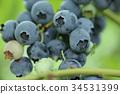 藍莓 水果 豐收 34531399