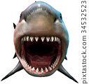 Shark with open mouth 34532523