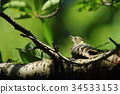 chick, hatchling, young bird 34533153
