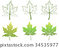 Maple Leaves and Contours 34535977