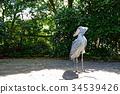 shoebill, bird, birds 34539426
