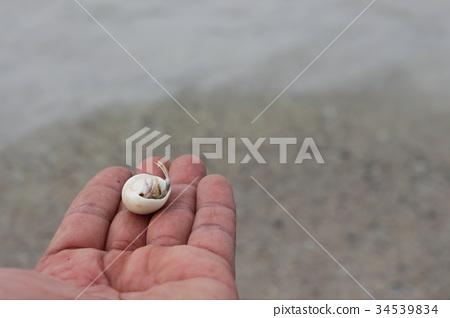 hermit crab on hand 34539834