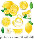Different lemons with leaves and flowers vector 34540560
