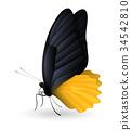 蝴蝶 背景 翅膀 34542810