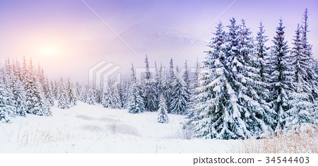 magical winter snow covered tree  34544403