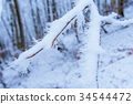 Autumn leaves on a tree in the snow 34544472