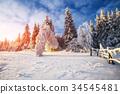 winter landscape trees in snow 34545481
